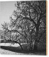 Under The Waiting Tree Wood Print