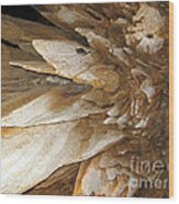 Underground Wonders. Luray Caverns Va Wood Print