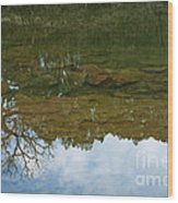 Underwater Landscape Wood Print by Lisa Holmgreen