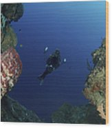 Underwater Photographer At The Entrance Wood Print