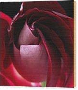 Unfolding Rose Wood Print