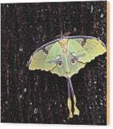 Unique Butterfly Resting On Tree Bark Wood Print