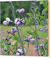 Unique Purple Flowers Wood Print