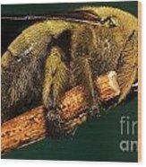 Unknown Wild Bee Wood Print