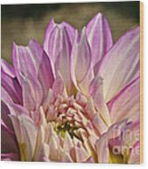 Unnamed Dahlia 3002 Wood Print