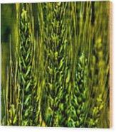 Unripened Wheat Wood Print
