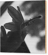 Untitled - Schlumbergera Bridgessii Wood Print