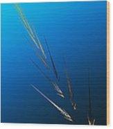 Untitled 2 082212 Wood Print