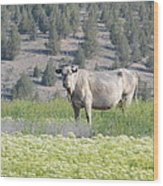 Unusual Colored Cow Wood Print