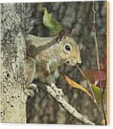 Up A Tree Wood Print by Debbie Sikes