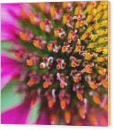 Up Close With A Cone Flower Wood Print by Susan Stone