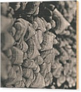 Up The Mushroom Tree Wood Print
