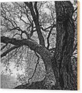 Up Tree Wood Print