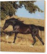 Uphilll Gallop Wood Print