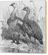 Upland Geese Wood Print