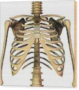 Upper Torso Bones, Artwork Wood Print