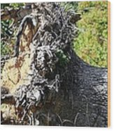 Uprooted By The Storm Wood Print