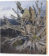 Uprooted Scot's Pine Tree Wood Print by Duncan Shaw