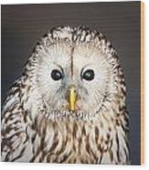 Ural Owl Wood Print by Tom Gowanlock