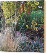 Urban Garden With Cactus Wood Print