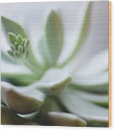 Usa, New Jersey, Jersey City, Close-up Of Succulent Plant Wood Print