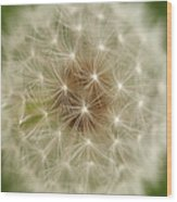 Usa, Pennsylvania, Close-up View Of Dandelion Wood Print