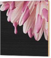Usa, Utah, Lehi, Close-up Of Pink Daisy Petals Wood Print