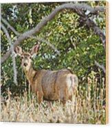 Utah Mule Deer Wood Print