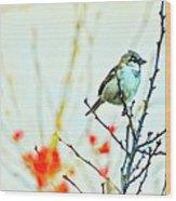 Valentine Sparrow  Wood Print