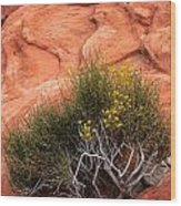 Valley Of Fire Yellow Vegetation Nevada Wood Print