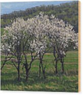 Valley Plum Thicket Wood Print