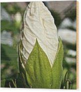 Vanilla Hibiscus Wood Print