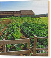 Vegetable Farm Wood Print by Carlos Caetano