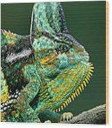 Veiled Chameleon Chamaeleo Calyptratus Wood Print by Ingo Arndt