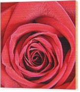 Vein Rose Wood Print