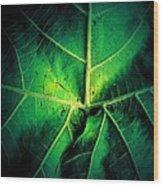 Veins Of A Sycamore Leaf Wood Print
