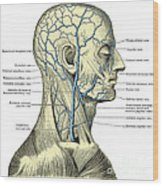 Veins Of The Head And Neck Wood Print
