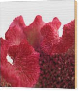 Velvet Bloom Wood Print