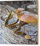 Velvet Foot Mushroom - Flammulina Velutipes Wood Print