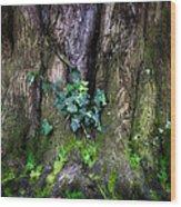 Velvet Ivy Wood Print
