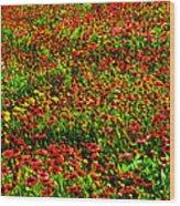 Velvet Spring Wood Print