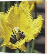 Venus Flytrap Tulip Wood Print