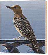 Veranda Visitor Wood Print