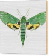 Verdant Sphinx Hawkmoth Wood Print
