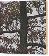Verdant To Red Wood Print