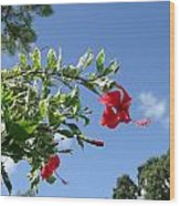 Verigated Leaved Red Hibiscus Wood Print