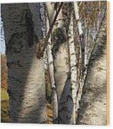 Vermont Birch Wood Print