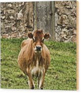 Vernon County Cow Wood Print