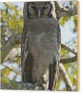 Verreauxs Eagle Owl, Bubo Lacteus, Or Wood Print by Paul Sutherland