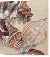 Vertical Conch Shells Wood Print